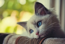 Cats: Beautiful. Inspirational. Adorable. / by Ashley White