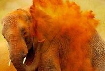 A Passion for Orange!!