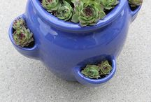 GROWING [Succulents & Air Plants]