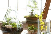 GROWING [Terrariums]