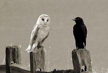 OWLS.. SPIRIT ANIMAL