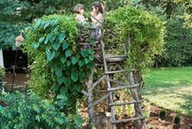 Backyard:  Play / by Georgiann Coons