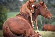 Mamas & Babies / Mom & Baby Love in All Kinds of Creatures / by Glenda Roslund