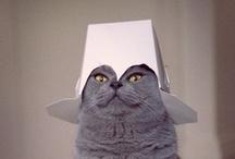 Cats! :)