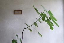 decent house plants