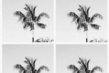 Polaroids / Polaroid photos  / by Pura Vida Bracelets