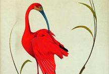 Illustration: Ornithology