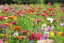 Gardening:  Flowers / by Georgiann Coons