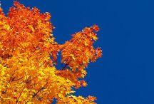 Seasons / by Debra Apple