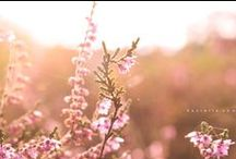 My photography Daniëlle vdm / Photography , nature, beautiful landscapes little flowers,canon 700d,eos,pink,background