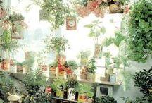 < plants > / Indoor jungles
