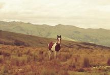 < horsegirl >