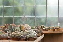 < greenhouse >