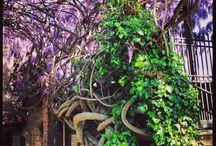 Secret Gardens tour 2015 / 5 private garden in Todi old town! Opened for Todifiorita Flower Festival 2015