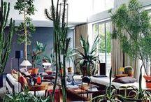 Indoor Garden Living / Indoor plants and bouquets
