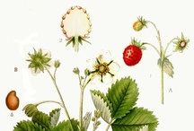 botanical art
