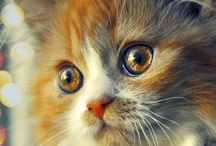 Cats / by Shirleyann Ryan