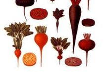 beet it! / food art