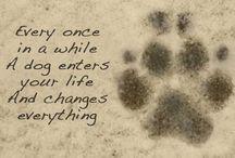 ❤️ Dogs ❤️