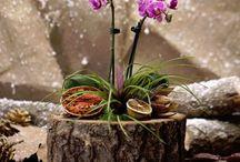 Teraryum Evi / Art of terrariums