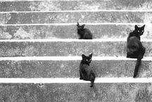 Take a step!