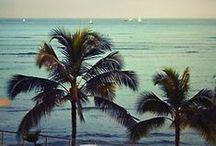 Palm-trees * Aloha *