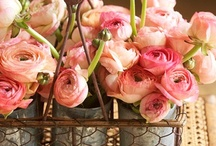 FF Roses! / Favorite Flowers. / by June Van Winkle