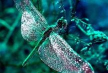 D R A G O N F L Y / The dragonfly, in almost every part of the world symbolizes change and change in the perspective of self realization; and the kind of change that has its source in mental and emotional maturity and the understanding of the deeper meaning of life.