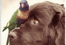 Pets / Dogs, cats, critters, birds, horses and pets that we love.