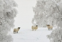 Winter White / by Alison Campbell