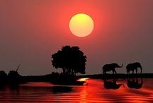 Elephants / by Lynn Le
