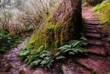 Forests / Forests that are mysterious, majestic and enchanting.