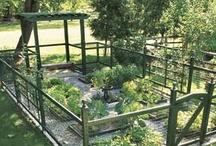 Garden / Back Yard