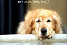 For Miller / Miller is our dog, from Mooselake Labs