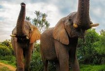 elephants / by Victoria Tennison