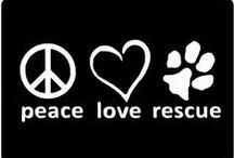 Causes / Important Causes such as Domestic Violence Awareness, Animal Rights and more!