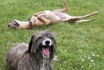 U Gotta Laugh!! / Laugh Until It Hurts!!!!! / by Charlene Bell
