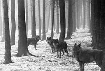 Woodland Friends / by Diana Liu