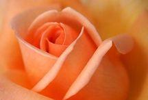 color love • orange