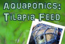 AQUAPONICS / Gardening in aquaponic system