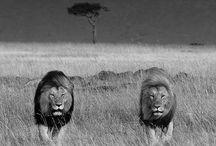 Animals / by Laura Allison