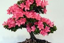 """✿ beautiful BONSAI ✿ / ✨ NO PIN LIMIT ✨  The word """"Bon"""" means """"tray"""" and """"Sai"""", """"growing"""" or """"planting"""".  ✨ NO PIN LIMIT ✨ / by ♡ Ginger Lindbloom ♡"""