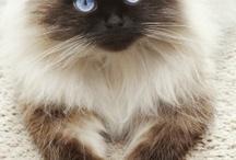 Cat Love! / by Peggy Keel Burton