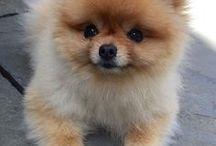 ..Too Cute.. / Too cute..