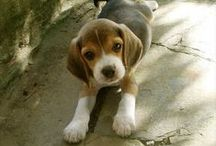 Way too CUTE!!!! / Dogs and animals