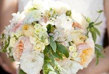 Wedding Bells are Ringing! / by Kristen Hillman