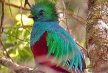 Bird Photos / by Patricia Dalton