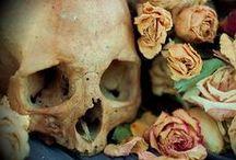 bones / : the frame / by Renee Fair