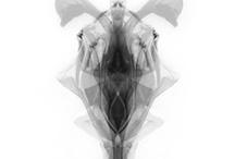 Bricolage / by Bridget Louca
