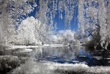 Winter Wonderland / Nature at its purest!